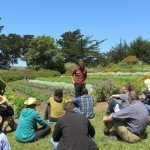 Cultivating Consciousness And Vegetables At The Esalen Institute