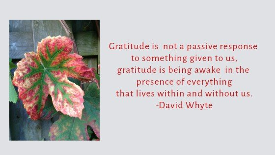 Guest Post #3:  Gratitude Is Being Awake